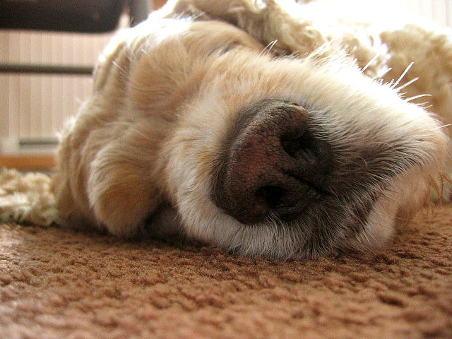 A close up of a dog lying on the ground