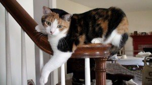 Cat sliding down the bannister