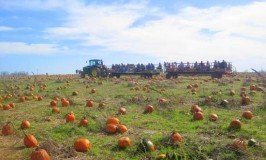 https://www.irishamericanmom.com/2011/10/23/pumpkin-patch-magic/