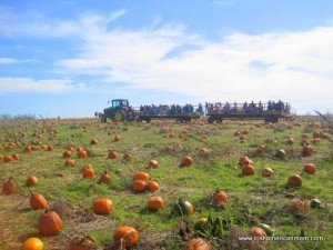 Hay rides to the pumpkin patch