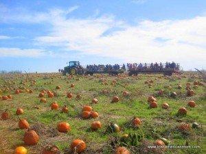 https://www.irishamericanmom.com/2011/10/23/pumpkin-patch-magic/