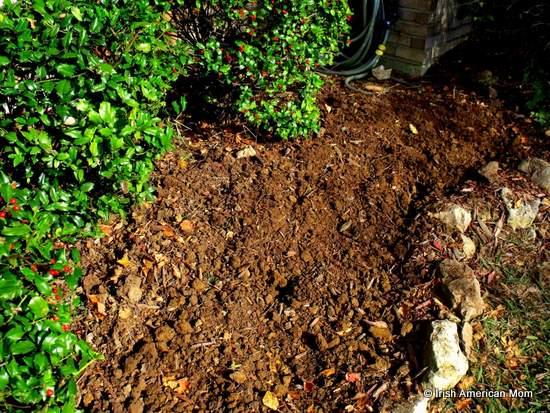Soil preparation for daffodils
