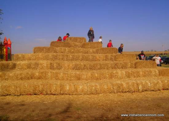 Stacked hay climber at Gallrein Farms Kentucky