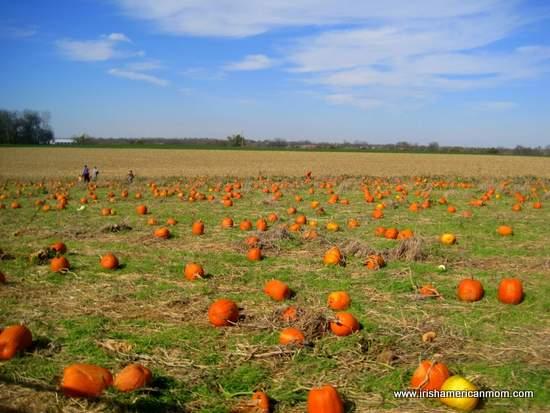 pumpkin patch in Shelbyville Kentucky