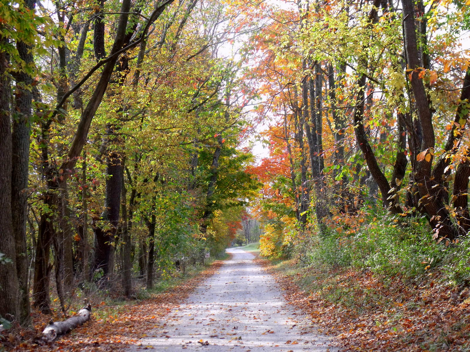 Autumn Leaves – Fall Foliage in Kentucky