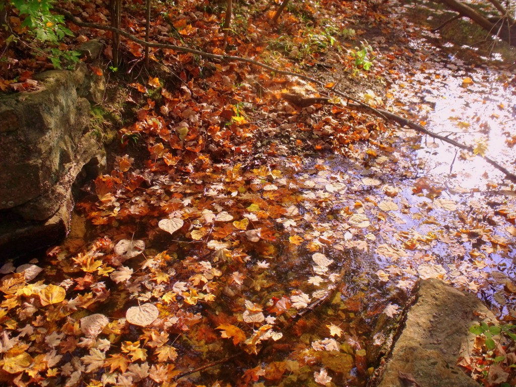 Leafy stream - fall image