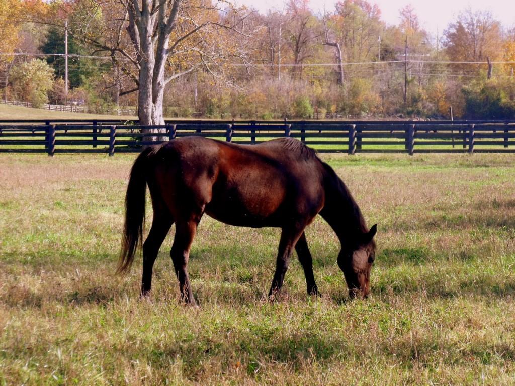Brown horse grazing in autumn