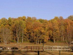 Autumn Leaves in Kentucky