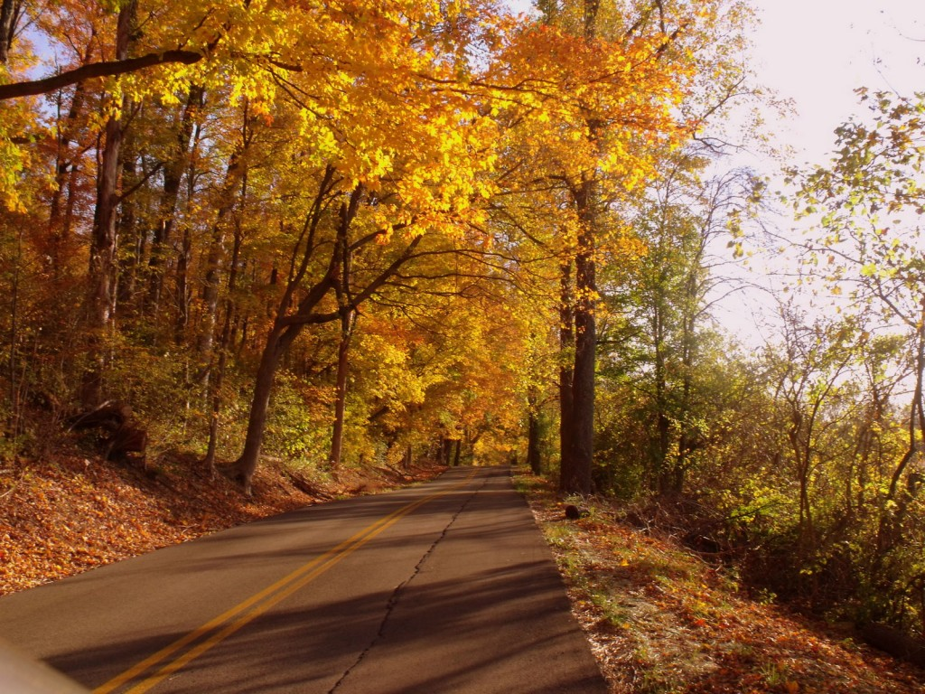Fall Foliage on Kentucky Road