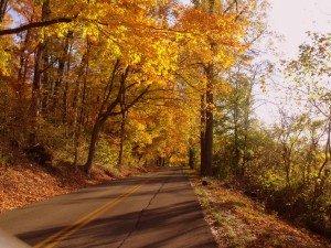 Fall Foliage on Kentucky Road