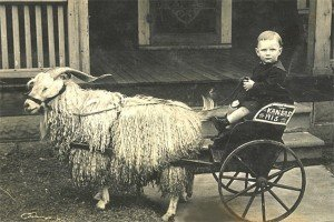 Old photo of a goat pulling a carriage with a child driving