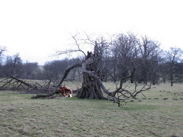 http://commons.wikimedia.org/wiki/File:A_sad_end_-_geograph.org.uk_-_668450.jpg