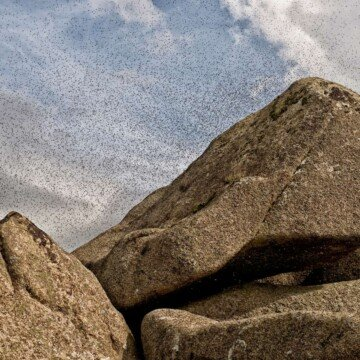 Midge insects flying above a rock