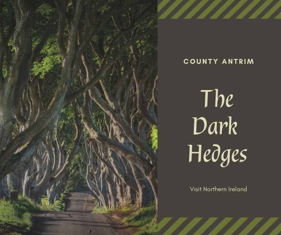 Graphic showing the Dark Hedges an entangled row of beech trees in Northern Ireland