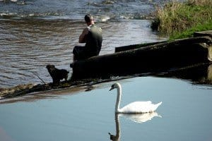 A swan watches a man and a dog on a riverbank
