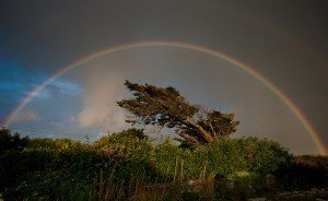 A full arc rainbow over a tree in Ireland