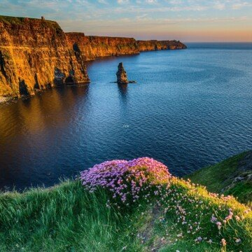 Sea cliffs with a rock pillar in the ocean and pink flowers growing on a ledge