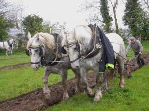 Contest for horse drawn ploughing in Ireland
