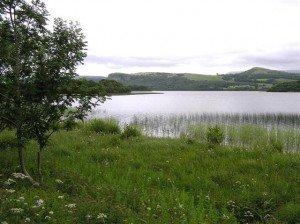 Reeds growing at the edge of Lough Macnean County Cavan