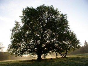 Tree in County Cavan Ireland