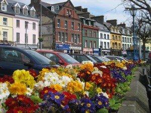 Polyanthus flower display in Cobh County Cork