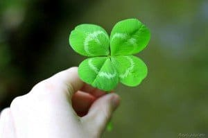 A four leaf clover being held in a hand