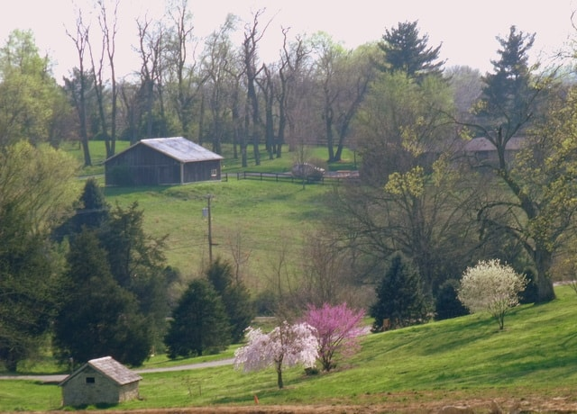 A barn in a field with blooming pink trees