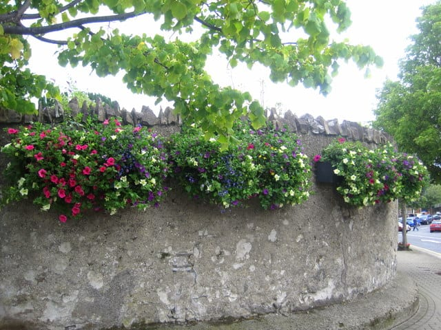 Three flower baskets on a stone wall under a tree branch