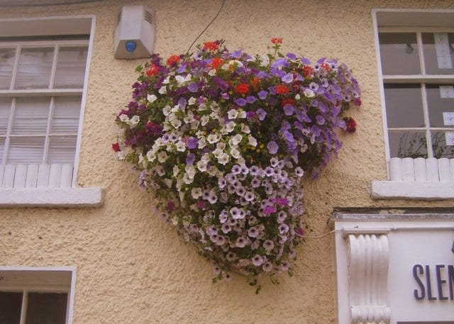 purple white and red flowers in a display on the side of an Irish building