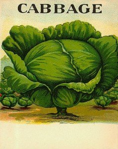 A cabbage plant growing in a field on a vintage poster