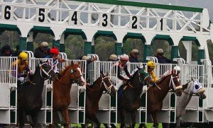 Horses in the stalls of a starting gate for a horse race