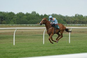 A horse running looking like it is flying as all four feet are off the ground