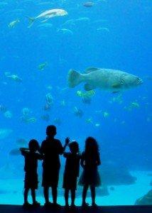 Silhouette of four children beside the shark tank at Georgia aquarium