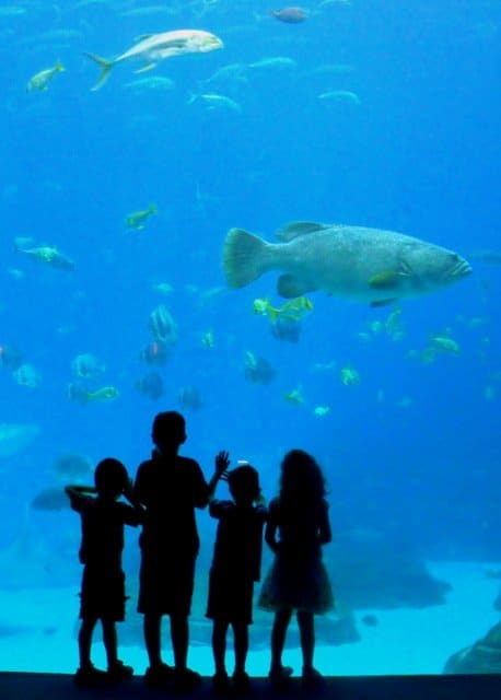 Silhouette of four children beside the shark tank at Georgia aquarium