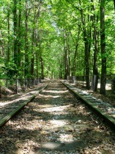 A straight tree lined railway track in Georgia