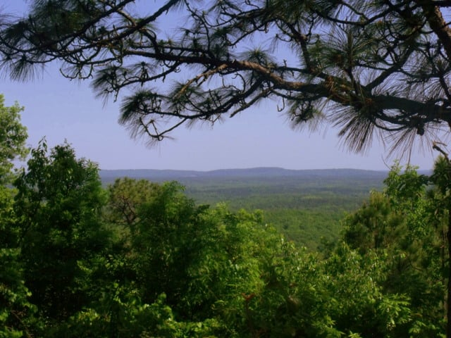 Pine tree branch frames a view of the Georgia landscape