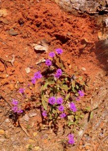 Red clay with purple flours in the state of Georgia
