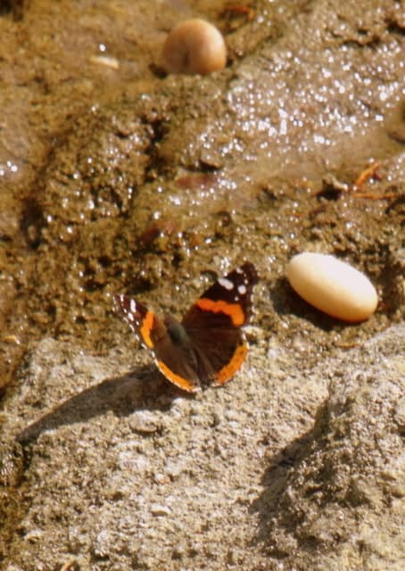 A close up of a butterfly by a stream