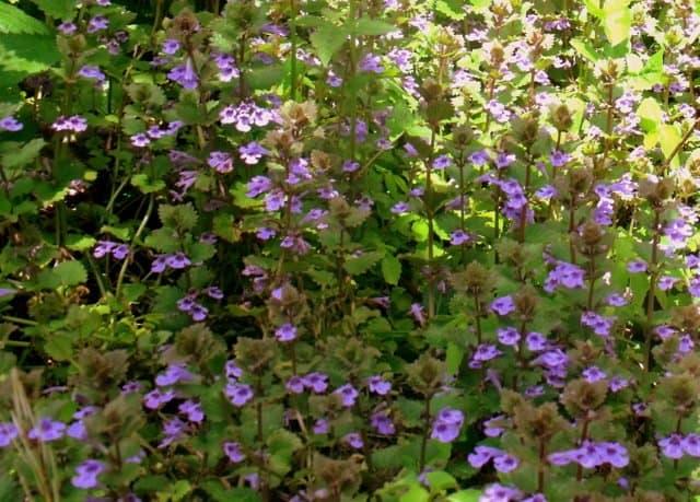 A purple flower on a plant