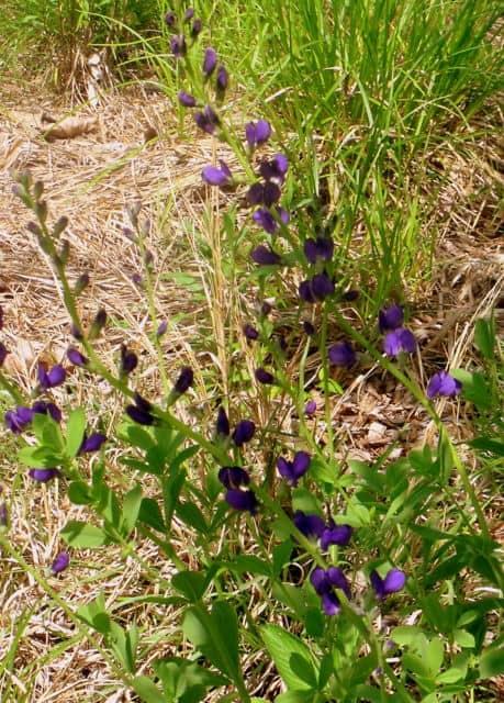 A purple flower in a field
