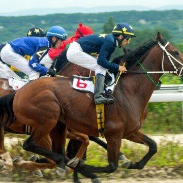 Jockeys riding race horses in a race