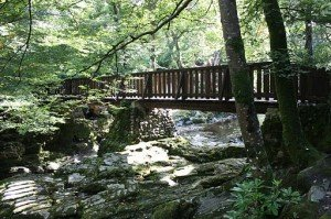 A wooden bridge over a river at Tollymore Forest Park
