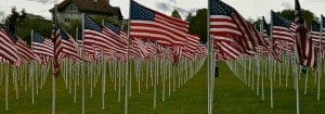 Rows of American flags in a field