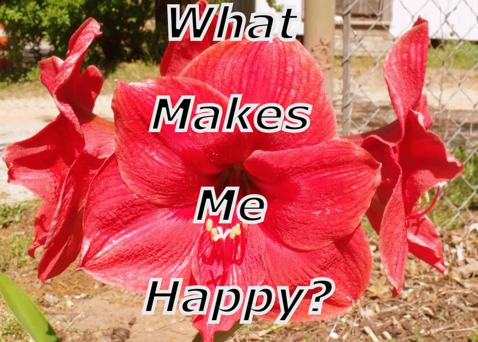 Red flower with text