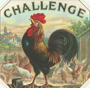 A rooster on a fence crowing with the word challenge above