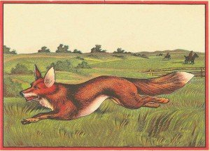 A fox running away from the hunt