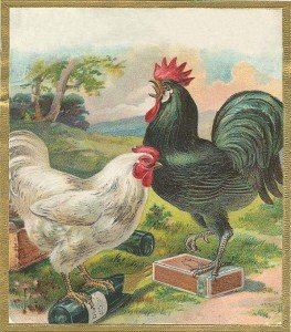 Vintage artwork of a white hen with a green and black rooster