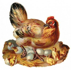 https://www.irishamericanmom.com/2012/05/10/lessons-in-life-from-wise-old-irish-hens/