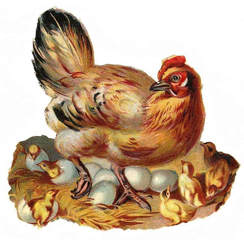 http://vintagerio.com/animal_g72-animal__p9802.html