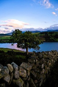 A fairy tree beside a granite stone wall and lake in County Down